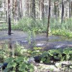 ELY-keskus suojelee vedet pilattavaksi