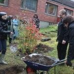Latvialaiset istuttivat puun