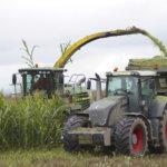 Maissi antaa karjalle energiaa