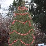 Gps-koordinaatit johdattavat joulukuusille