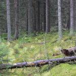 Maaseudun eläkeläismiehet omistavat Pirkanmaan metsät