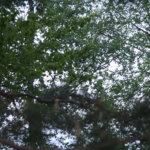 Pälkäneen metsäalueet kiinnostavat pelastus- ja palveluskoiratoiminnan maastoharjoituspaikkoina