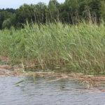 Metsästäjäliitto ja BirdLife Suomi haluavat malttia vesilintumetsästykseen