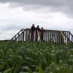 Maissilabyrintin mittasuhteet paljastuvat, kun löytää sen keskellä olevalle sillalle.