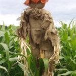 Maissilabyrintissä harhaileva törmää monenlaisiin linnunpelätteihin.