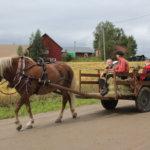 Hevoskyyti Oksalan tilan leppeässä maisemassa oli perinnepäivän vetonauloja.