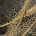 Erikoinen saalis kalaverkossa