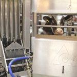 Pälkäneläisiä maidontuottajia palkittiin