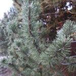 Suosittu joulupuukilpailu elvytetään välivuosien jälkeen