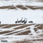 Pirkanmaan maakunnallisesti arvokkaat lintualueet on nimetty