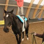 Voimistelua hevosen selässä