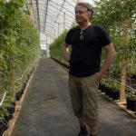 Suttisen tilalla kokeillaan tänä vuonna ensimmäistä kertaa kasvihuonevadelman viljelyä.