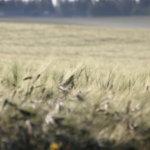 Ilmastoinnostusta Pälkäneen kylissä – Rautahovissa vietetään ilmastoiltapäivää