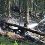Metsää kärähti Laitikkalassa