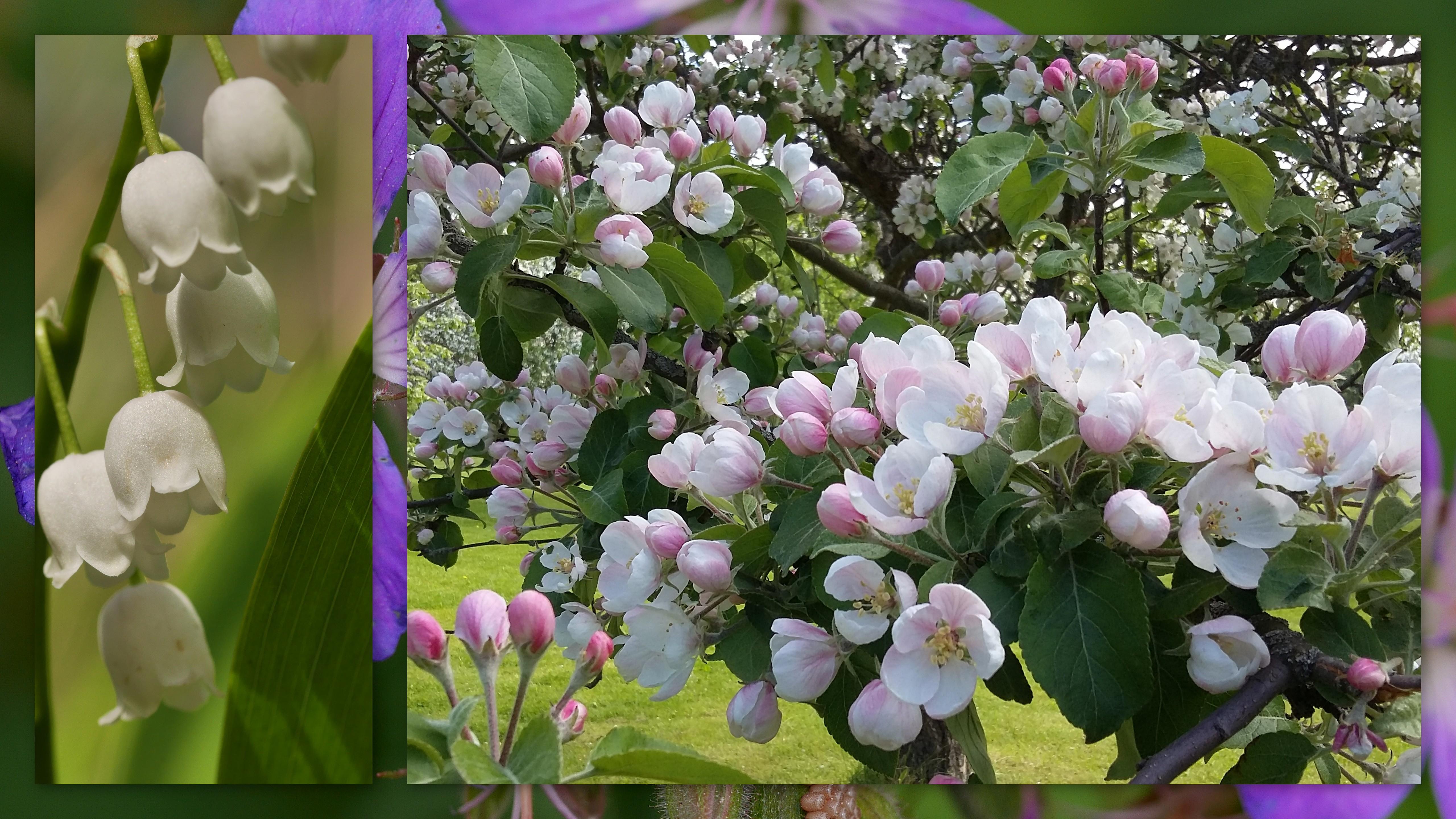 Omena Muumiotauti