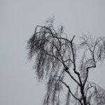 Tuuli puhaltaa voimakkaasti tänään – Kangasalla 449 taloutta ilman sähköä, Pälkäneellä 48