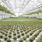 Kangasalla selvitettiin ravinteiden uusiokäyttöä – avaa mahdollisuuksia uudelle liiketoiminnalle ja lisää kiertotaloutta