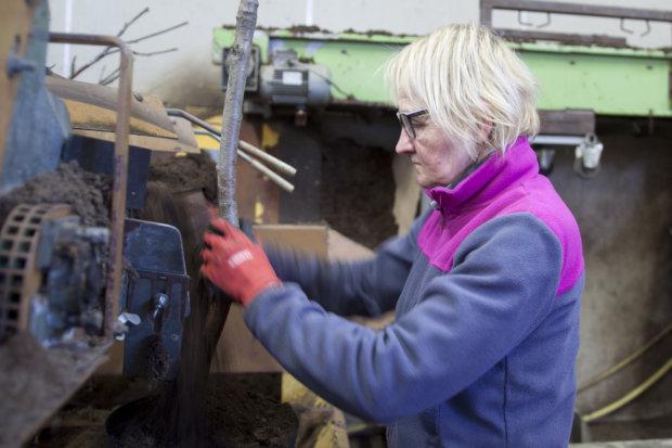Katja Veijalainen istuttaa riippapihlajia ruukkuihin. Kasvit saavat juurtua ja versoa kesän ajan ulkona. Syksyllä ne lähtevät myymälöihin tai kylmävarastoon.