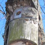 Pölkystä koverrettu pönttö sulautuu hyvin puun runkoon.