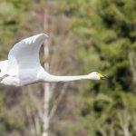 Lintuja kevätmaisemissa