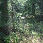 Metsäkin tarvitsee hyvää varhaiskasvatusta