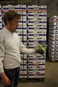 Rödingin tilalla salaatit pakataan ja jäähdytetään omassa hallissa. Salaatit viljellään ilman kemiallisia torjunta-aineita. Jani Jokinen esittelee jäävuorisalaattia, jota tila tuottaa Lidlille.