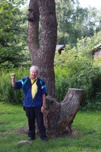Hannu Uotila on kertonut uhrimännyn historiasta monilla kyläkävelyillä. Kuvassa mänty oli vielä voimissaan, nyt siitä on enää muisto jäljellä.