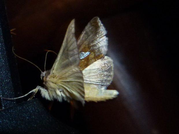 Riitta Puisto on kuvannut perhosia eri puolilla maapalloa.