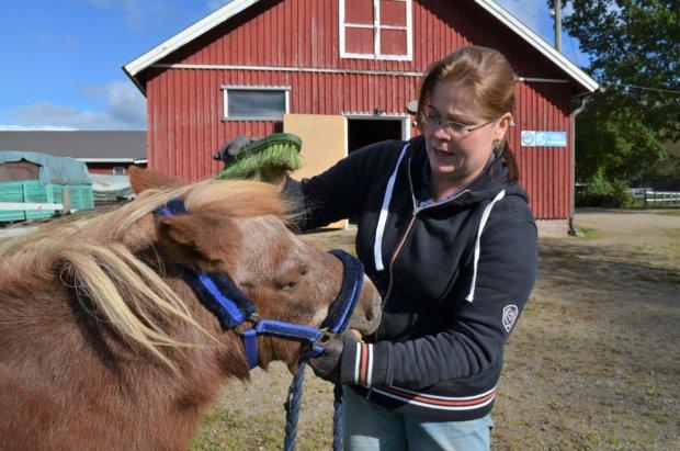 Arvokkaasti harmaantunut Vinski-poni nauttii täysin siemauksin Marissa Henttisen tarjoamasta harjauspalvelusta.