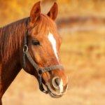 Kangasalla ratsastetaan tänään auringonlaskuun – ensimmäinen Horse cruising night -tapahtuma kokoaa hevosharrastajia yhteen