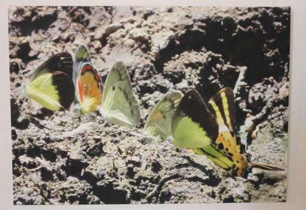 Riitta Puisto: Perhoset mäellä