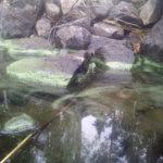 Sinilevää havaittu myös Pälkänevedeltä ja Roineelta