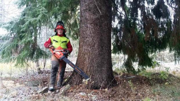 Isojen puiden kaato vaatii isot työkalut.