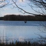 Kirkkojärvi todettiin Pirkanmaan viime kesän leväisimmäksi järveksi Sastamalan Houhajärven kanssa – sinileväkausi arvioitiin seurannan päätteeksi keskimääräistä laimeammaksi