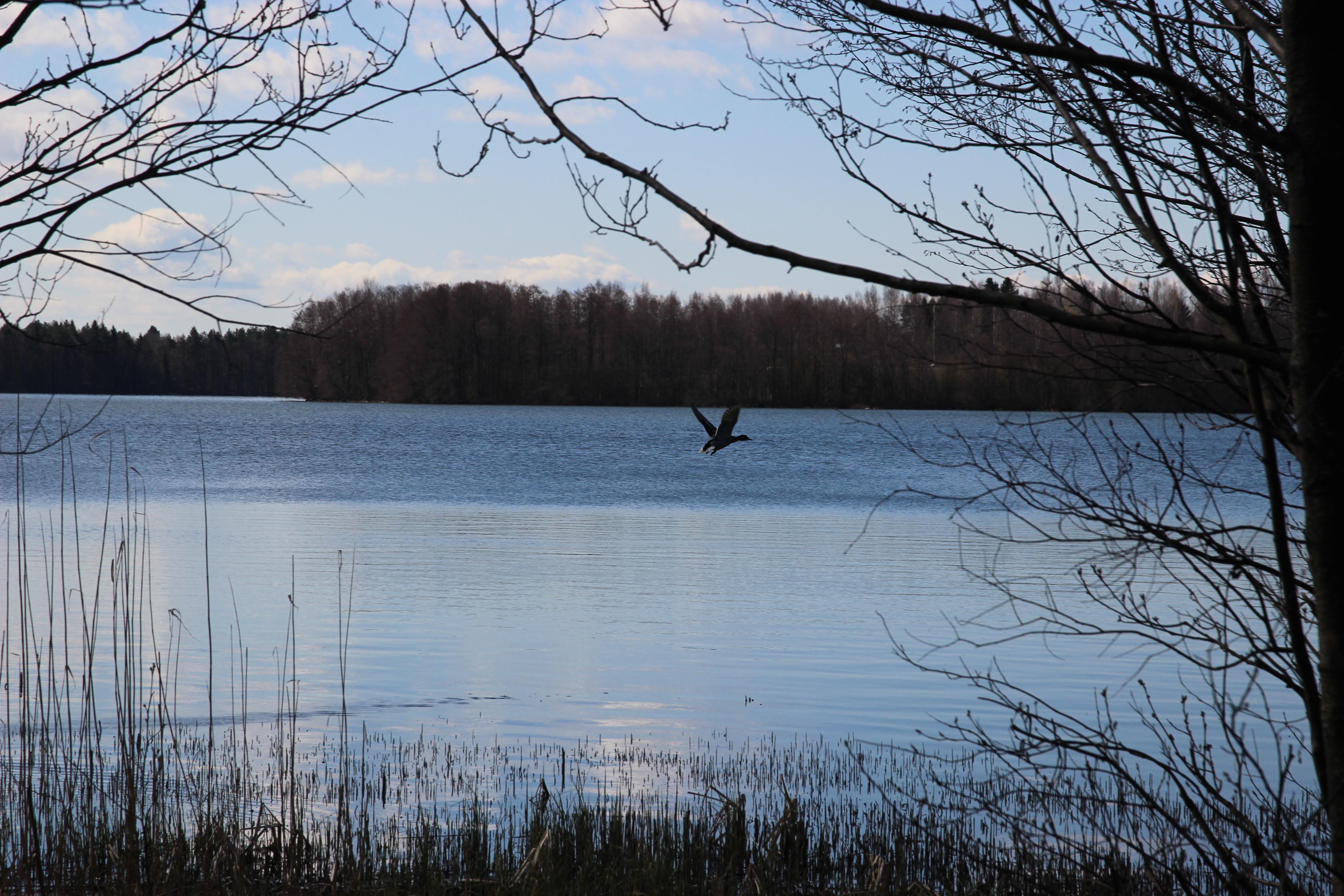 Kirkkojärvi todettiin Pirkanmaan viime kesän leväisimmäksi järveksi Sastamalan...