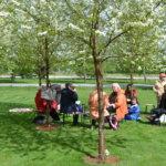 Kirsikkapuiston piknik – uusi yritys
