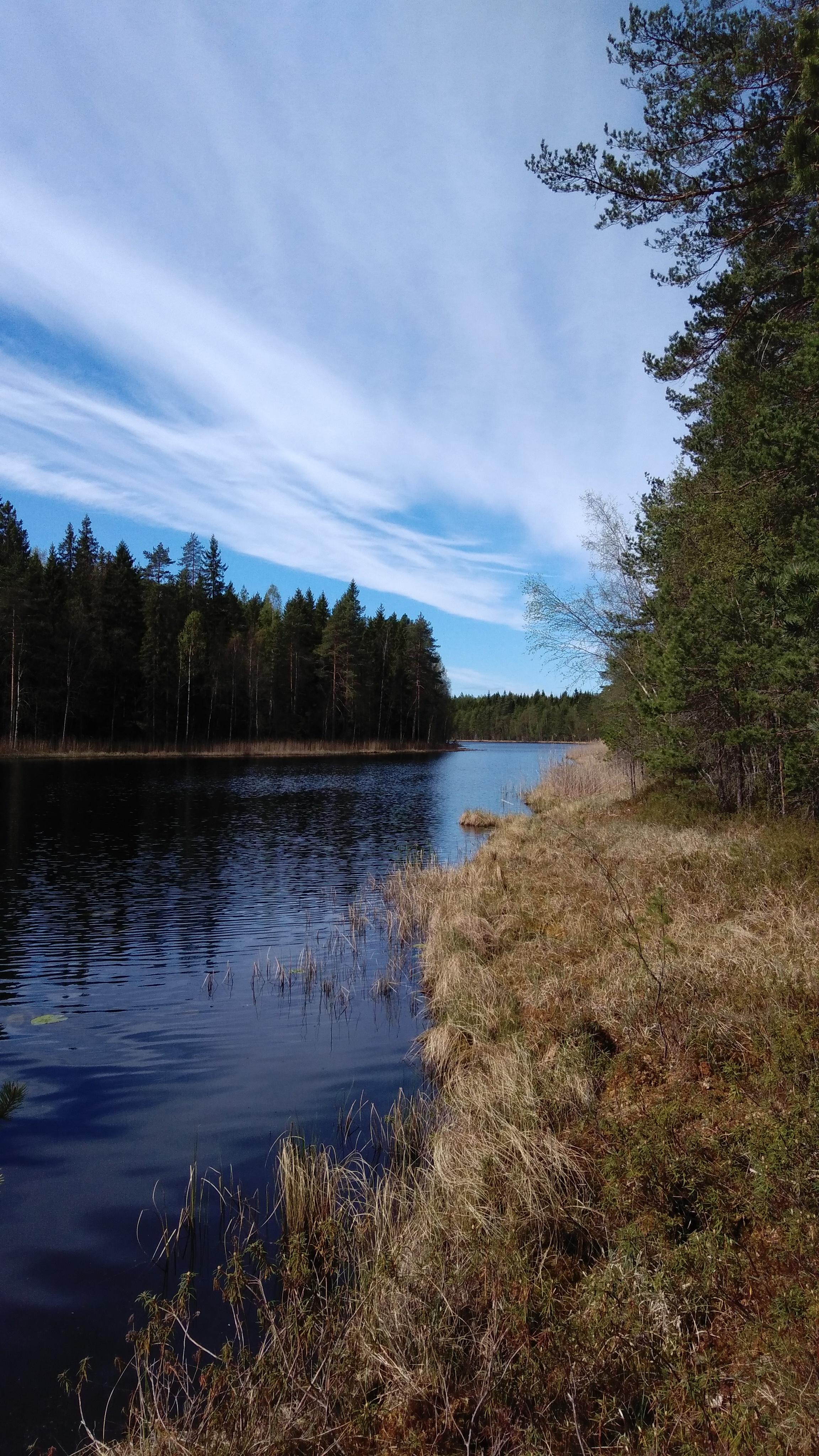 Aivujärvi