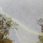 Lämmin sää lisäsi sinilevähavaintoja – Kangasalla levää havaittiin kolmessa paikassa