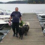 Kadonneet lampaat rannalla