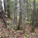 Luontoyhdistys toivoo luonnonsuojelualuetta