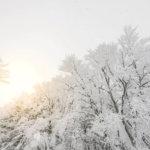 Lukijan runo: Talvi puutarhassa