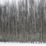 Maksuttomissa metsäveroilloissa saa rahanarvoisia neuvoja metsänverotuksesta.