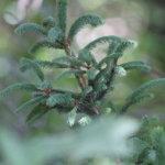 MHY Roine tarjoaa välineet maa- ja metsäomaisuudesta huolehtimiseen