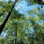 """""""Esteellinen virkamies, vanhentunut ympäristöarviointi, vaarantunut Natura-alue…"""" – Luonnonsuojeluliiton Pirkanmaan piiri vaatii Tavasen hakemuksen hylkäämistä"""