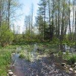 Metsien peruskuivatusta voidaan tehdä vesistöjä säästäen