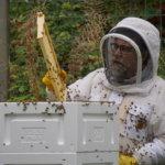 Mehiläistarhuri tekee palveluksen myös lähiluonnolle
