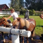 Hevosharrastus sopii kaikenikäisille