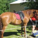 Kangasalla kehitetään hevosalaa