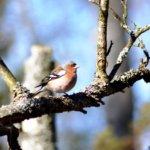 Toukolintu, riukuhäntä, tuomiherra – linnuille on muodostunut kansan suussa kuvaavia nimiä