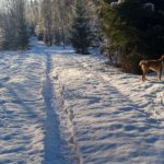 Pienellä pilattu lumikenkäpolku